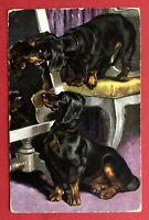 Künstler AK DACKEL 1911 Dackel auf Stuhl  ( 66428