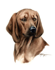 Redbone Coonhound A