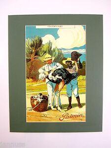 alter Druck Bild hinter Passepartout Palmin Serienbilder Südafrika 50x40cm 268