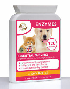 Digestive Supplement For Dogs Cats and Puppies   All Natural Enzymes Supplement