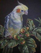 Cockatiel exotic bird wildlife Fig painting