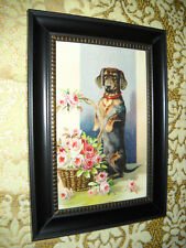 DACHSHUND WITH ROSES 4 X 6 black framed animal picture Victorian style print