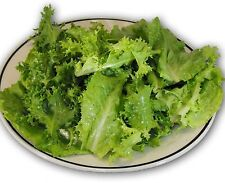 Endive/Escarole (Frisee) Mix- 1,000+ Heirloom Seeds         $1.69 combined S/H