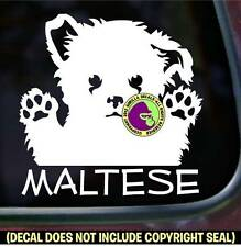 Maltese Dog Breed Puppy Vinyl Decal Sticker Dog Bumper Car Window Sign