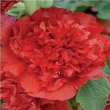 Fiore - Altea Chater Scarlatto - 20 Semi