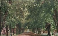 Fairbury Illinois~South Fifth Street~Houses & Trees Line Both Sides1910 Postcard