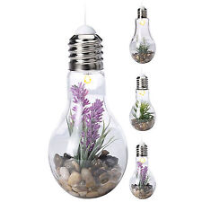 Large LED Decorative Light Bulb Glass Terrarium Jar Vase Table Lamp Deco Plant
