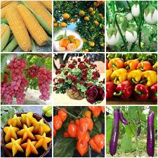 Gemischt Tomatensamen Hausgarten Gemüse Obst Samen Saatgut