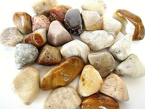 Three Agatized Coral Agate Tumbled Stones 30-40mm Reiki Healing Crystals Heart