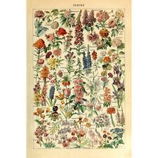 Vintage Poster Print Floral Garden Flowers Botanical Collections Home Art Decor