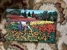 T2-1 postcard unused dutch girl gathers tulips in bulb time