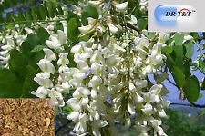 DR T&T Huai Hua (Flos Sophorae) Sophora FIORE 100g