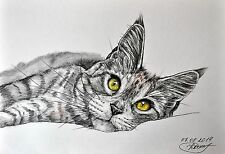 Life`s Good Maine Coon original watercolor pencil painting drawing kitten