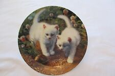 """A Chance Meeting: White American Shorthairs""collector plate"