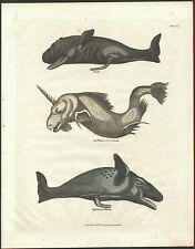 WHALE VARIETIES late 1700's vintage original painted engraving - hand made paper