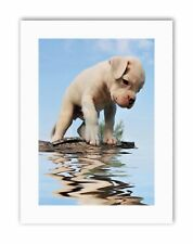 Chiot Boxer Water Reflection Photo Poster Photo Toile Art Prints