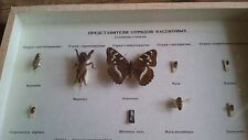 Soviet Vintage Zoological Dried Bug collection.
