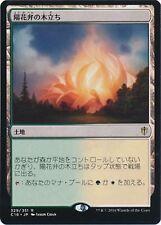 ***4x JAPANESE Sunpetal Grove*** Commander 2016 Mint MTG Magic Cards