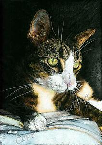'Green Eyes' A4 A3 A2 Cat Cats Feline Art Print of tabby drawing by RussellArt