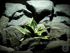 silk reptile plant or terrarium plant: sansevaria snake plant. prp171