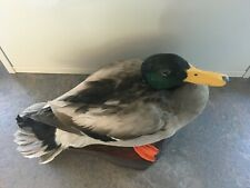 A drake mallard mounted on a wooden base.