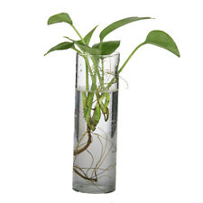 Hanging Glass Flower Plant Vase Terrarium Container Home Decor Cylinder 15cm