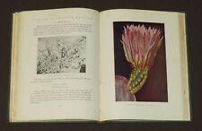Cactaceas Mexico 1922 Ochoterena Cacti Peyote Drug Drugs Indians Botany Botanic
