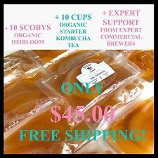 SCOBY x 10 + 10 cups of starter kombucha tea + EXPERT support + FAQ on our web.