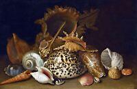 Still-life of sea shell by French  Berjon Antoine. Canvas Wall Art  13x19 Print