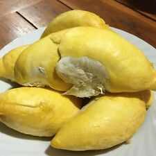 HOT!!! Durian Seed Thai Fruits Taste Is Heavenly. Fresh Ready Sow Viable Seed