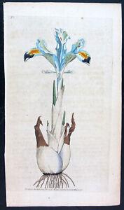 1787,ANTIQUE PRINT EARLY CURTIS ORIGINAL WATERCOLOUR ENGRAVING PERSIAN IRIS VMW
