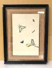 """Nicolaas Struyck's """"Butterflies and Insects"""" Framed Drawing"""