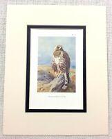 1929 Antico Uccello Stampa Agitati Gambe Poiana Di Wild Prey Fauna Selvatica Art