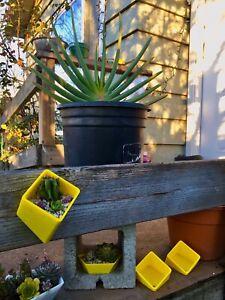 "Cacti Succulent Planter Indoor / Outdoor 3D Patio Boho Decor Garden 3"" Diameter"