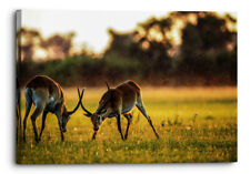 Antelope Mammals Animal Africa Grazing In Field Canvas Wall Art Picture Hom.