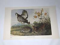 John James Audubon Folio Plate 55 Greater Prairie Chicken Limited 750