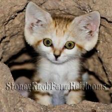 Arabian Sand Cat ~ Wild Cats, Kittens ~ Diy Counted Cross Stitch Pattern