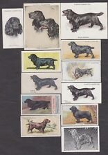 12 Different Vintage Field Spaniel Tobacco/Tea/Candy Dog Cards Lot