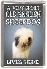 "Old English Shpdg Fridge Magnet ""A VERY SPOILT OLD ENGLISH SHEEPDOG LIVES HERE"""