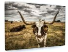 Longhorn Cow Animal Canvas Picture Print Wall Art C199