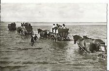 Fotokarte Pferdekutschen, Wattwagen Nordseeheilbad Sahlenburg Ansichtskarte