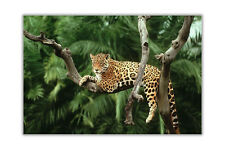 Jaguar On Tree Poster Prints Animal Wall Art Home Decoration Pictures