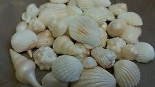 24 Edible Sugar Icing Sea Shells Shimmer Beach Cupcake Toppers Cake Decorations