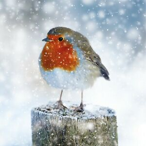 Christmas Cards Pack of 10 with Envelope Available Models Charity Greeting Cards