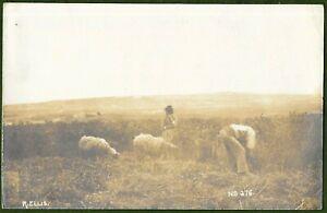 Maltese Shepherds, Real Photographic Card by R. Ellis, Malta Photographer c1906.