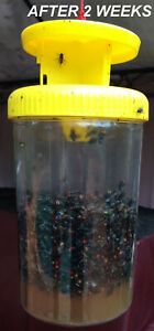4 x FLY TRAP - Fly Catcher - Catch Blow Flies House Trap SAFE NO CHEMICALS