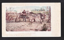 "1901 Donkey""s Kissing  When shall we meet again? comic western postcard"