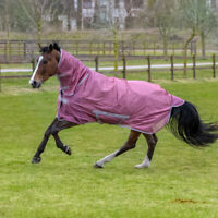 Bucas Freedom Fly Sheet Full Neck PONY - Rose - Fliegendecke