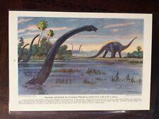 1942 vintage original magazine illustration Diplodocus Dinosaur