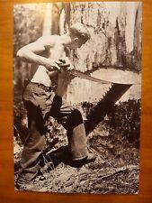 POSTCARD...NATIONAL ARCHIVES OF AUSTRALIA...LOGGING A KARRI TREE ...1946 PHOTO